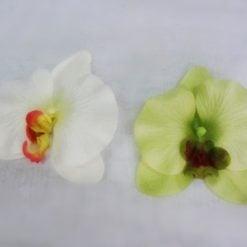 L596 Орхідея
