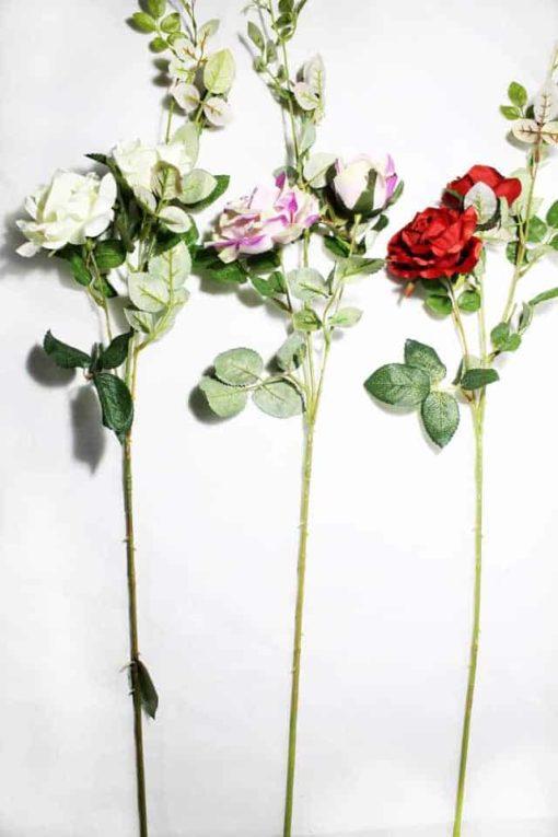 Троянда L169