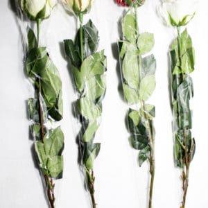 Троянда одинарна К2398