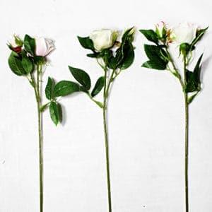 Троянда міні SUN452