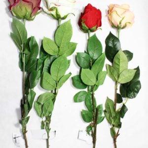 Троянда SUN490