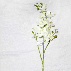 Орхідея SUN324