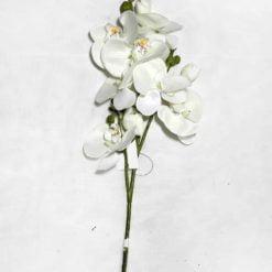 Орхідея SUN008