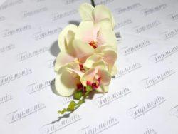 Орхідея гумова