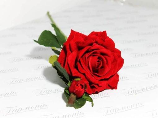Троянда вельветова