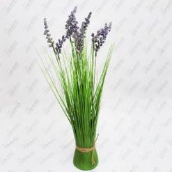 Трава лаванди