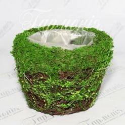 Ємність трава/мох TG55456-1