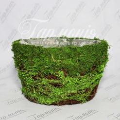 Ємність трава/мох TG55456-3