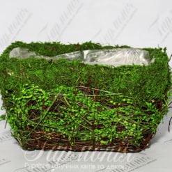 Ємність трава/мох TG55457-1