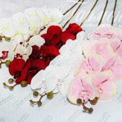 Орхідея VIP1783