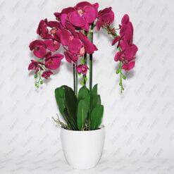 Орхідея гумова у вазонку P2356